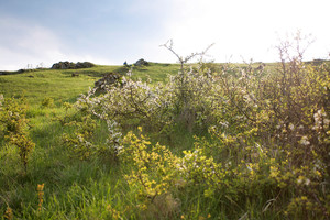 Frühjahrssonnenuntergang